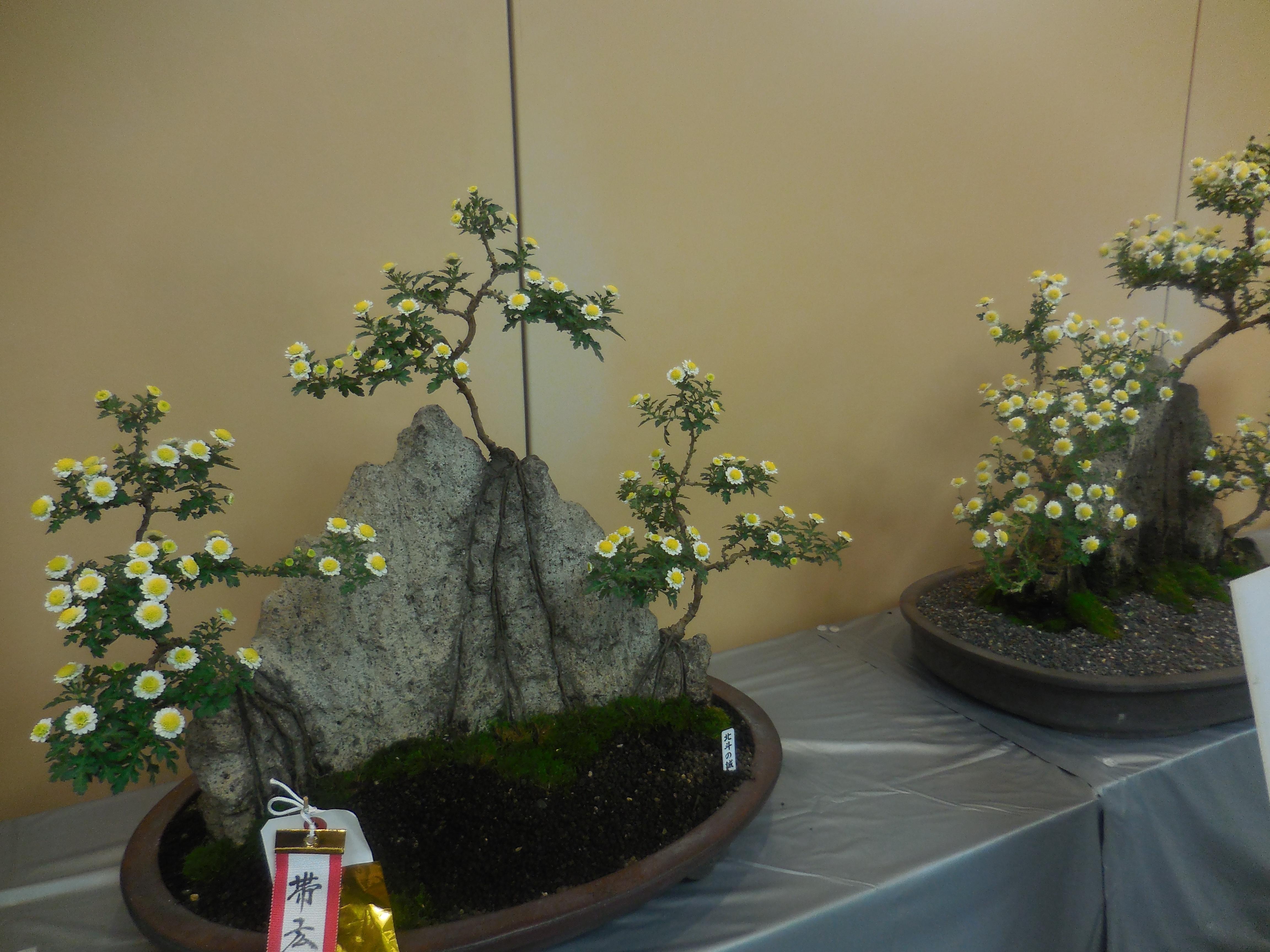 菊まつり・盆栽