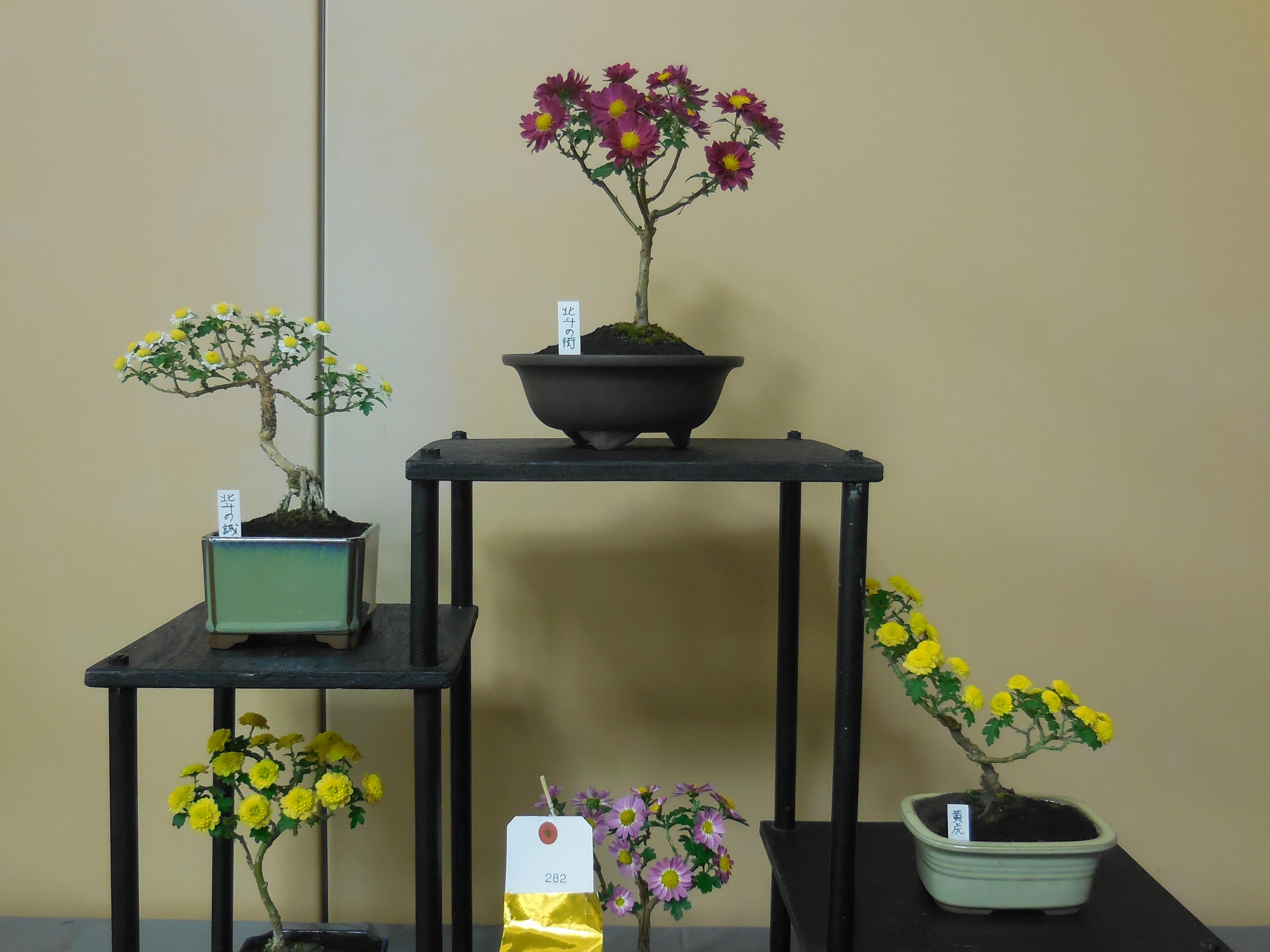 盆栽・飾り棚の金賞作品